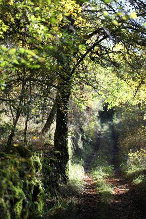 Chemins de randonnées Floirac Lot