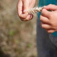 « Fête de la Moisson » des souvenirs et des traditions, floirac